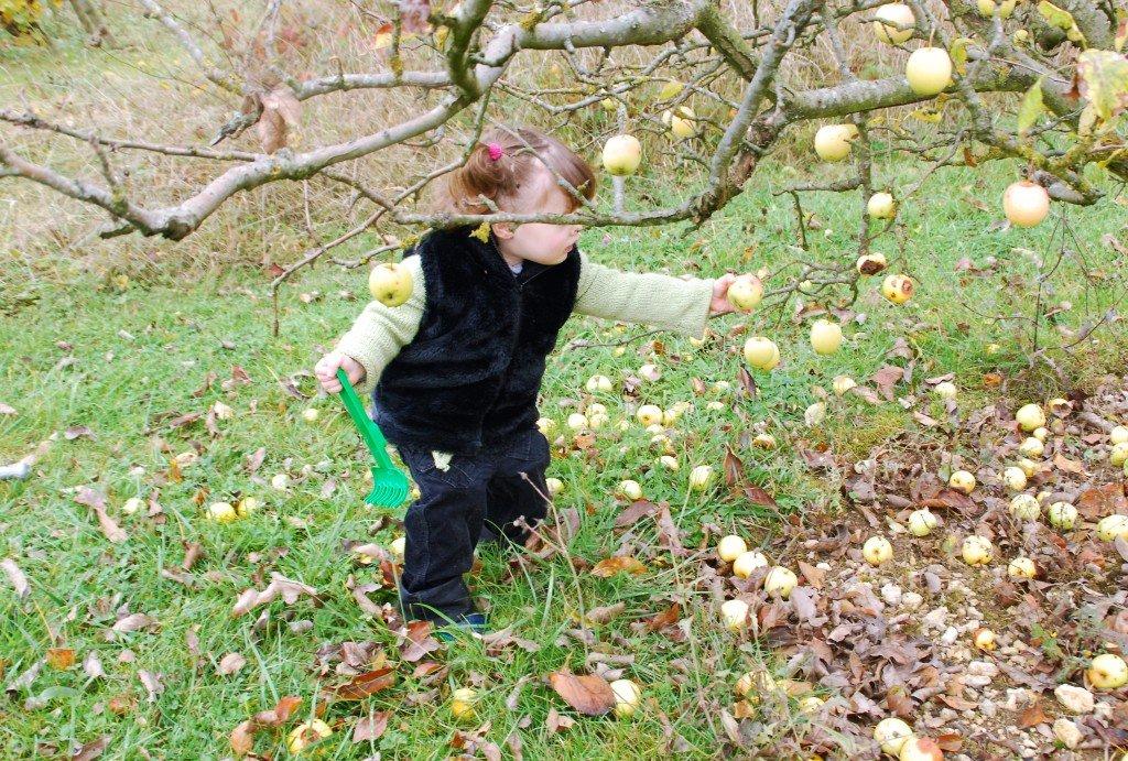 Lauryne pommes